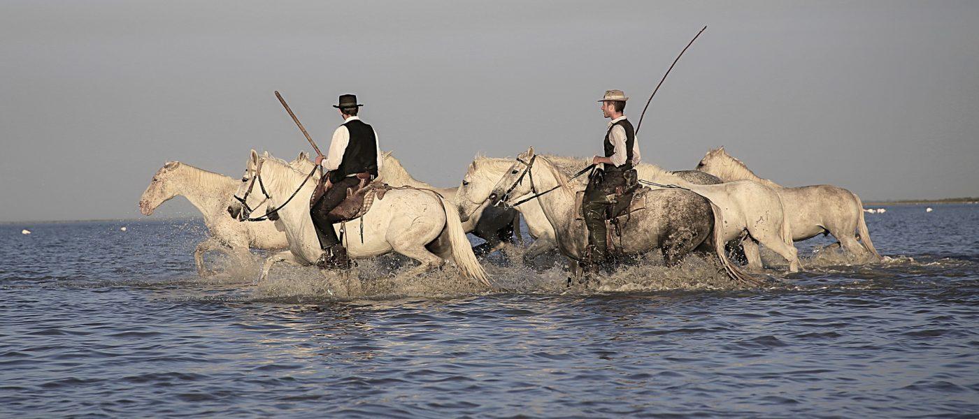gardiens chevaux